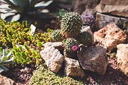 Уникальная выставка кактусов
